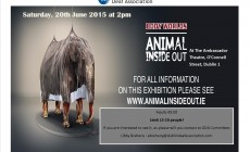 Animal Inside Out Poster (1)